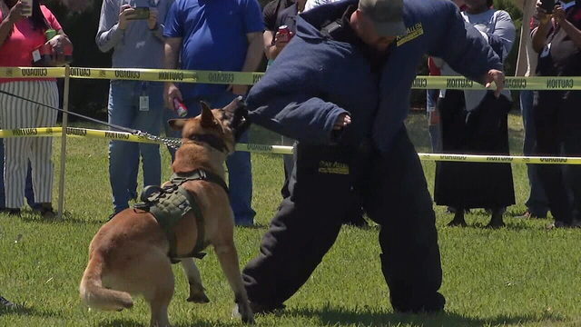 How additional safety measures are protecting police K-9s