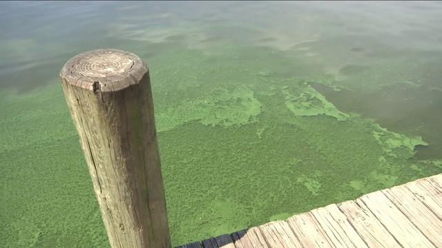 Keeping close eye on algae in St. Johns River