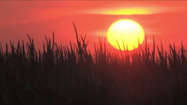 'Flash drought' brings dust, dread to southern farmers