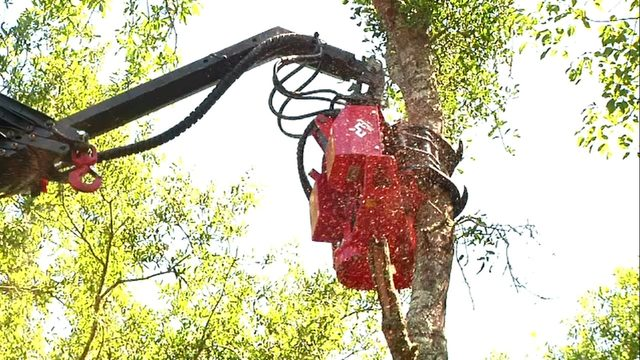 Is 'Megatron' the future of tree trimming?