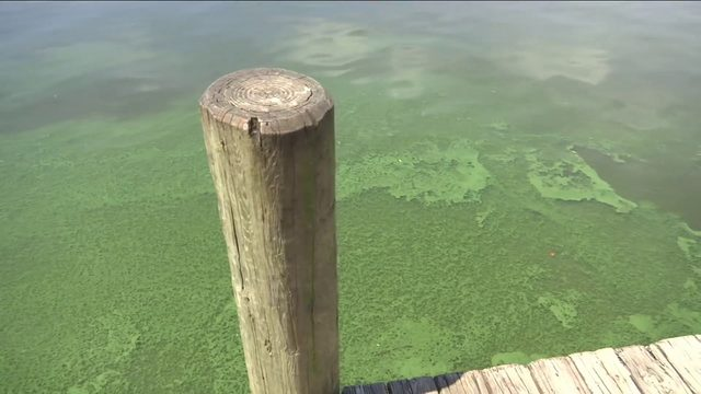 Guidelines to stop Florida's harmful algae outbreaks unveiled