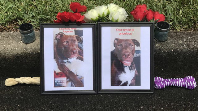 Jacksonville couple mourns pet dog killed in hit-and-run