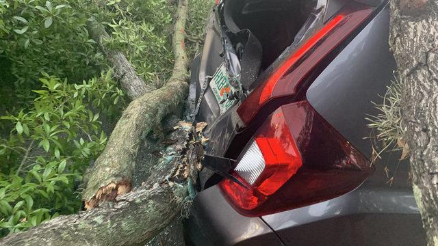 Large tree falls onto car, blocks traffic downtown