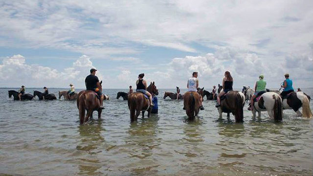 Tampa Bay horse tours leave poop in water, concern environmentalists