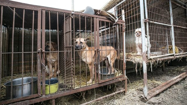 Nassau Humane Society saves 15 dogs from Korean Meat Farms