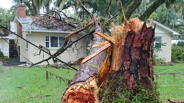 Tree falls on home, debris & damage left in wake of storms in Jacksonville
