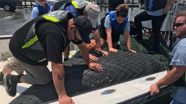 FWC increasing patrols to prevent manatee deaths from boats