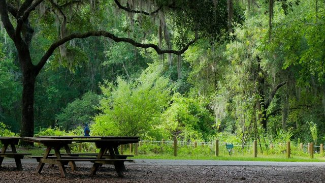 Best local trail winner: Jacksonville Arboretum and Gardens