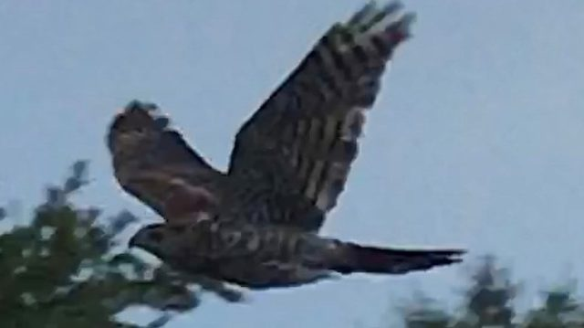 Radar sighting? News4Jax hawk possibly spotted over weekend