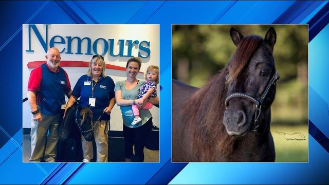Miniature therapy horse spreads joy at Nemours