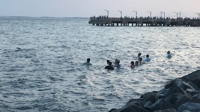 3 pilot whales die after 'exceedingly rare' St. Simons Island strandings