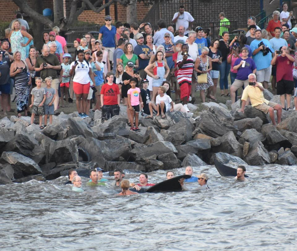 3 pilot whales die after 'exceedingly rare' St  Simons Island