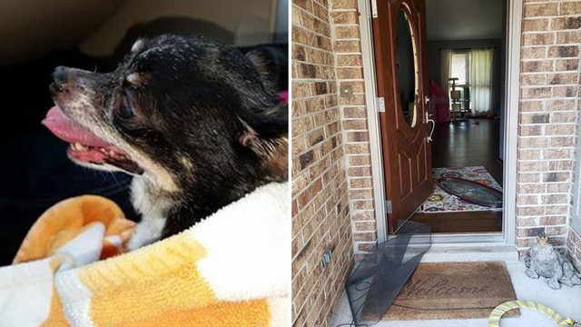 Beloved family dog found dead after Chimney Lakes home broken into