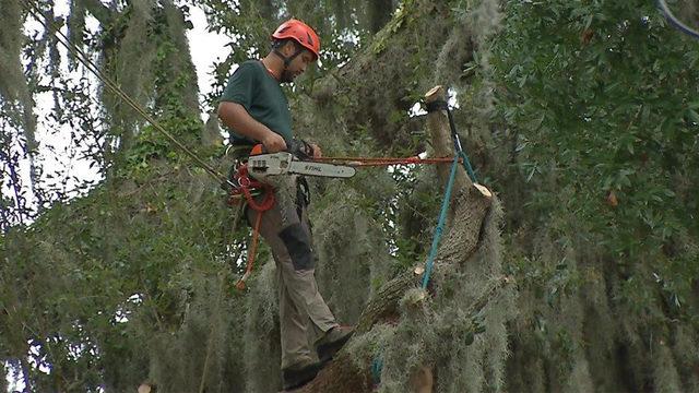 Crews scrambling to trim trees before Hurricane Dorian arrives