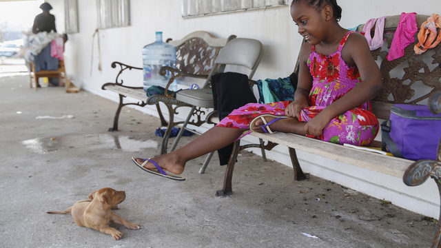 'Nassau helping Nassau': Shelter's relief efforts go beyond animals