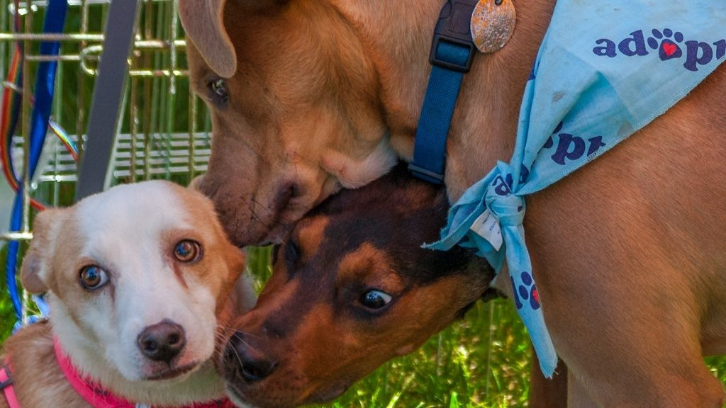 Jacksonville Humane Society offering free adoptions this weekend