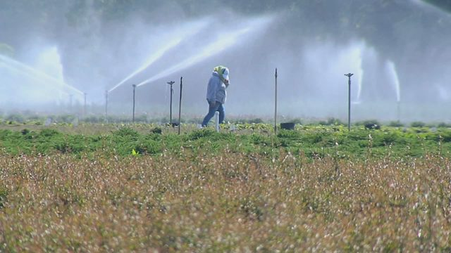 Agriculture, septic tanks targeted by Blue-Green Algae Task Force